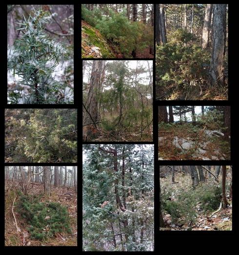Die Wacholderbilder vom Dezember 2012