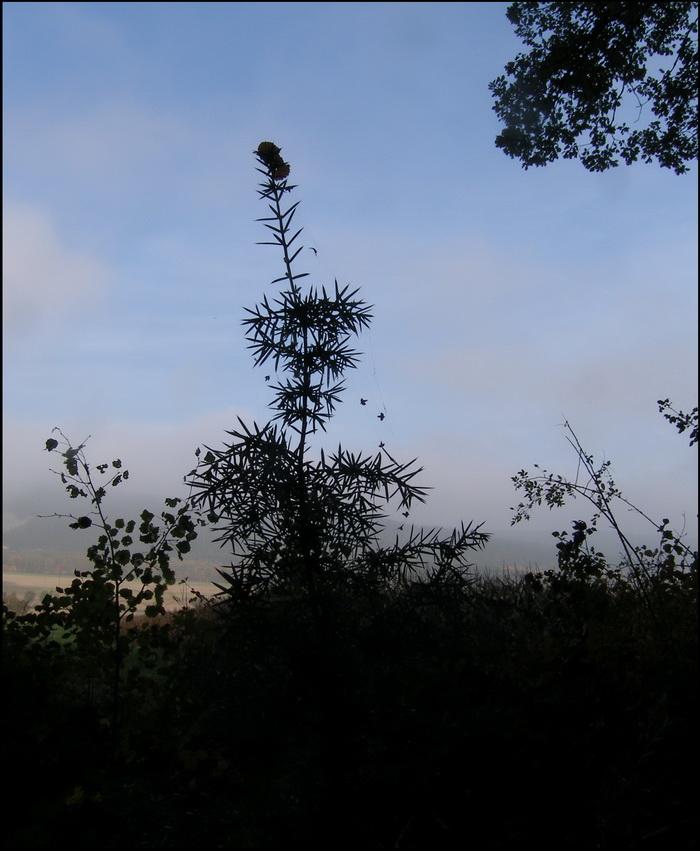 in junger Baum im Saum eines schattigen Laubwaldes auf dem Wege von Haidlhof nach Grossau