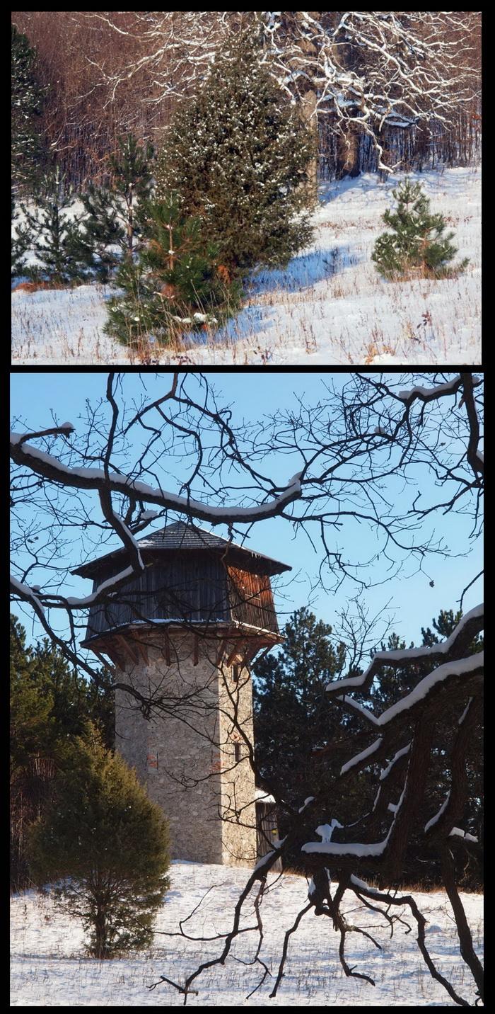 Auf der Turmwiese im Merkensteiner Tiergarten konnte ein Wacholderbaum eine dicht und gleichmäßig benadelte Krone ausbilden.